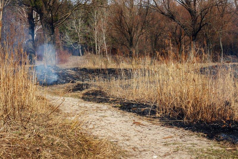Fuego fuerte en el bosque en el lago Mucho humo en el CCB fotos de archivo libres de regalías