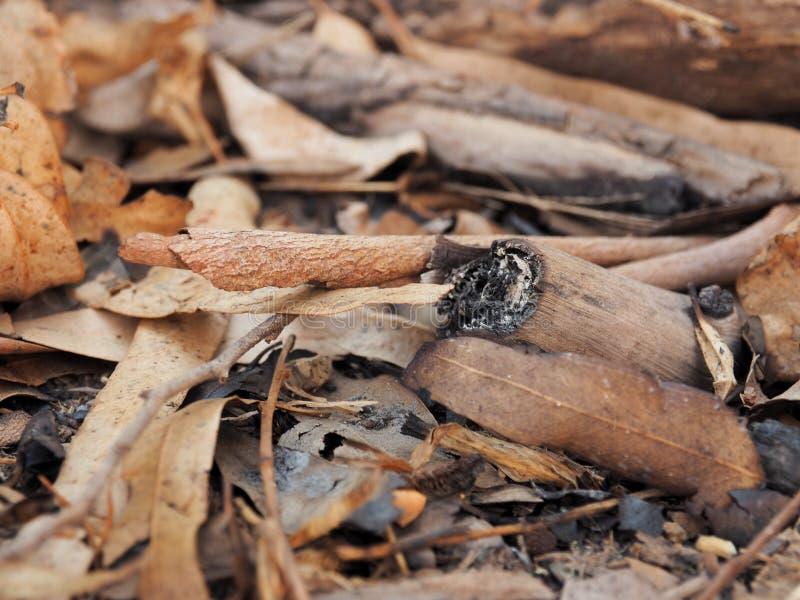 fuego marrón seco del carbón de leña de madera fotos de archivo libres de regalías