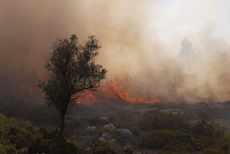 Fuego y bosque foto de archivo libre de regalías
