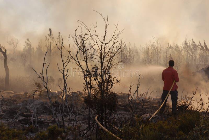 Fuego y bosque imágenes de archivo libres de regalías