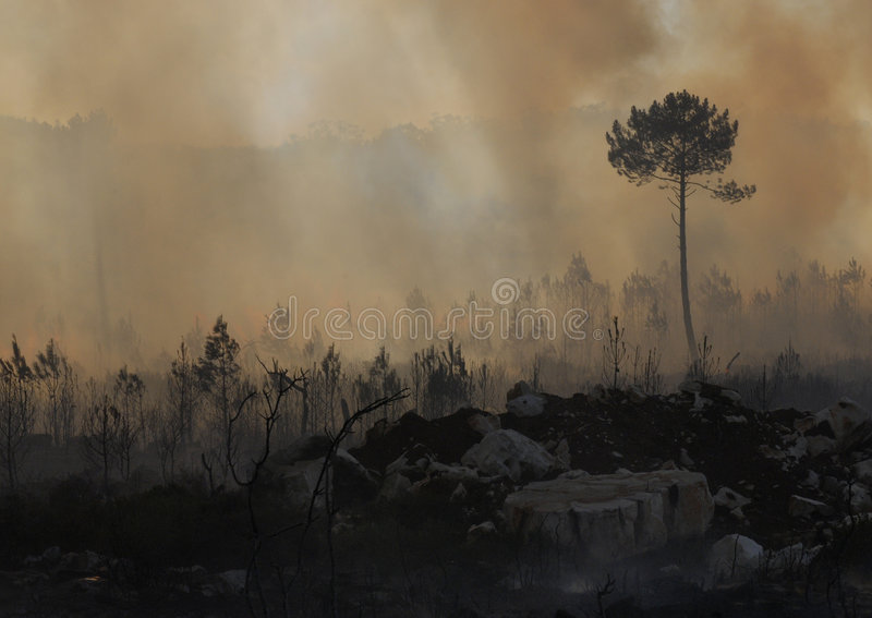 Fuego y bosque fotografía de archivo