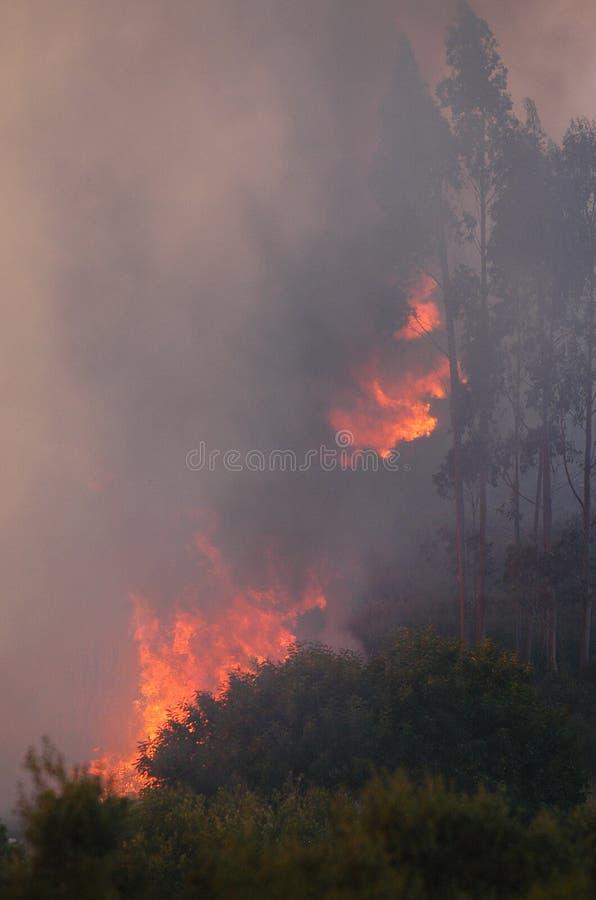 Fuego y bosques fotografía de archivo libre de regalías