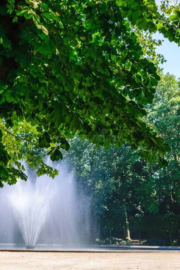 Fuente cerca del árbol en el parque foto de archivo libre de regalías