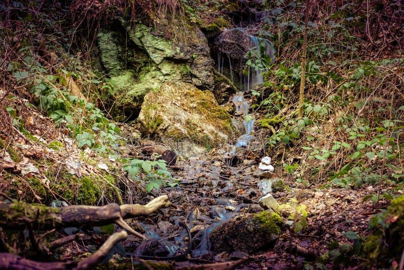Fuente de agua en el bosque del misterio por la tarde imagenes de archivo
