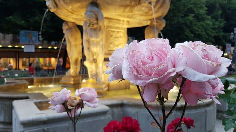 Fuente de Granada rodeada por las rosas en la noche foto de archivo