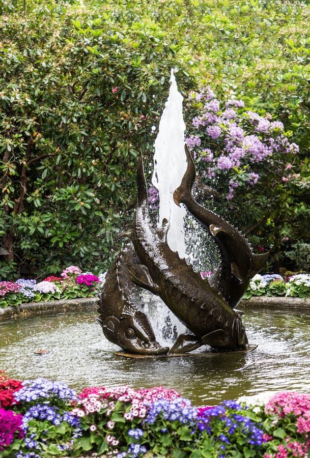 Fuente de los pescados en jardín fotografía de archivo libre de regalías
