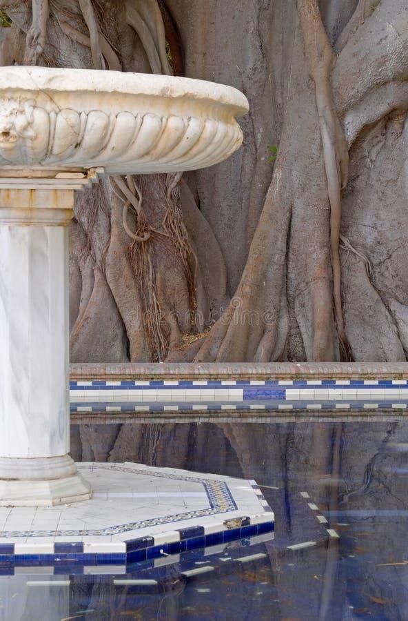 Fuente de mármol y ficus centenario viejo imagen de archivo