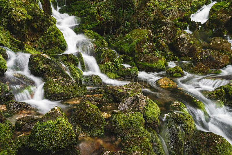 Fuente del río Grza, Serbia fotografía de archivo libre de regalías