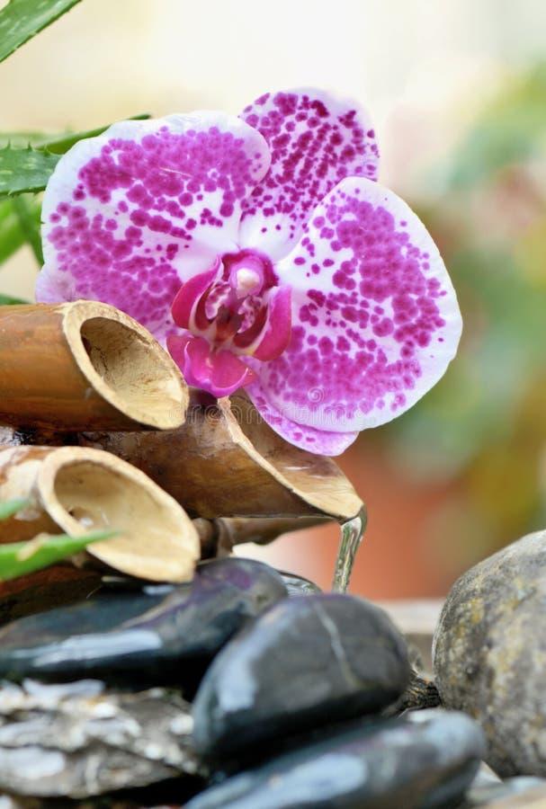 Fuente y orquídea con agua que fluye en piedras negras fotografía de archivo