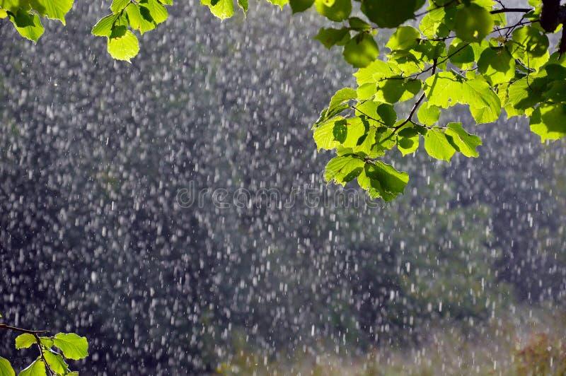 Fuera de la lluvia del foco los descensos destacaron por el sol en un día de veranos con las hojas verdes enfocadas en el primero imagen de archivo