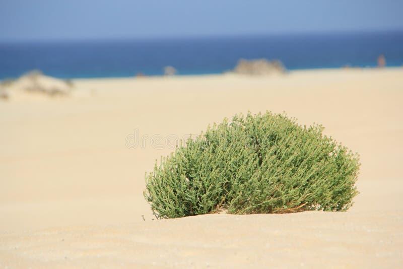 Fuerteventura royaltyfri bild