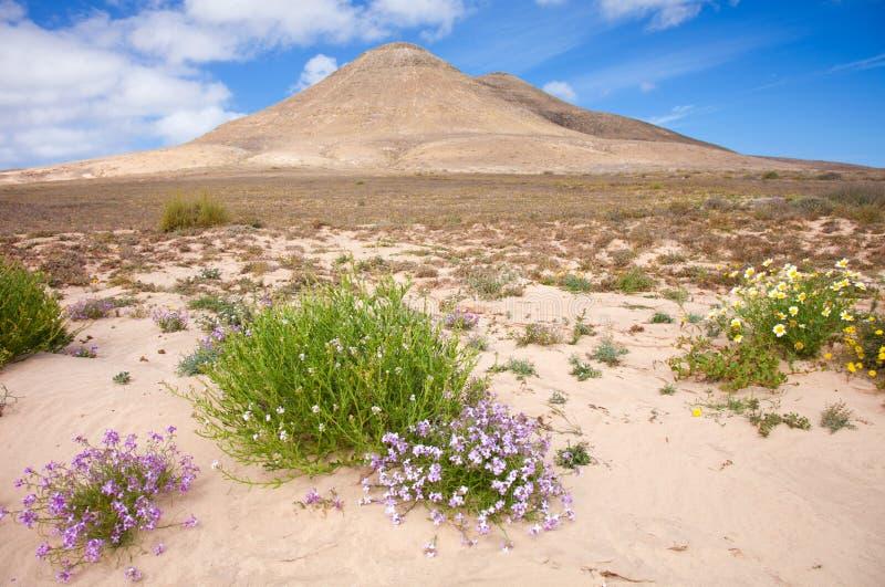 Fuerteventura do norte interno foto de stock