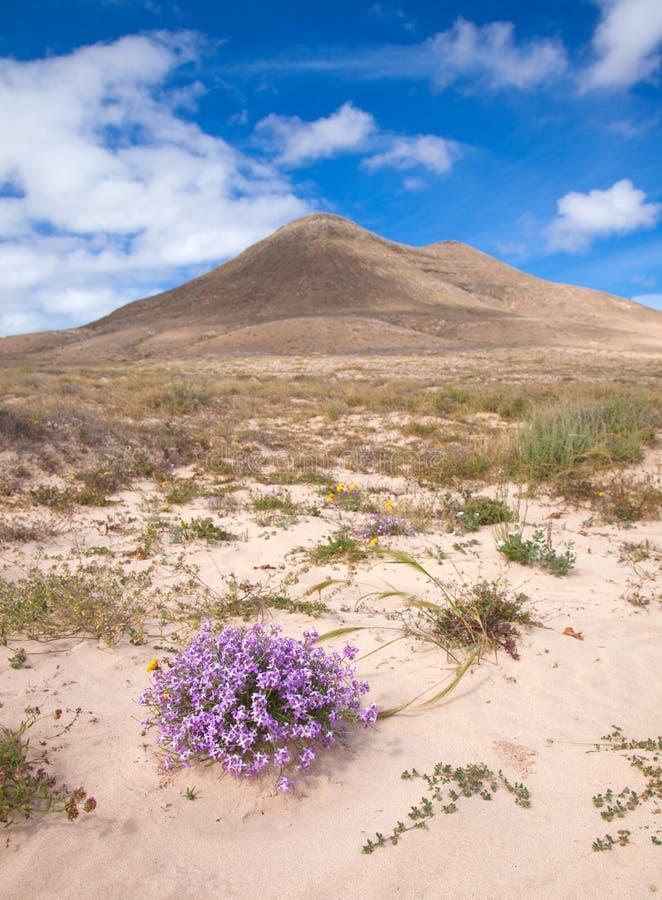 Fuerteventura du nord intérieur photo libre de droits