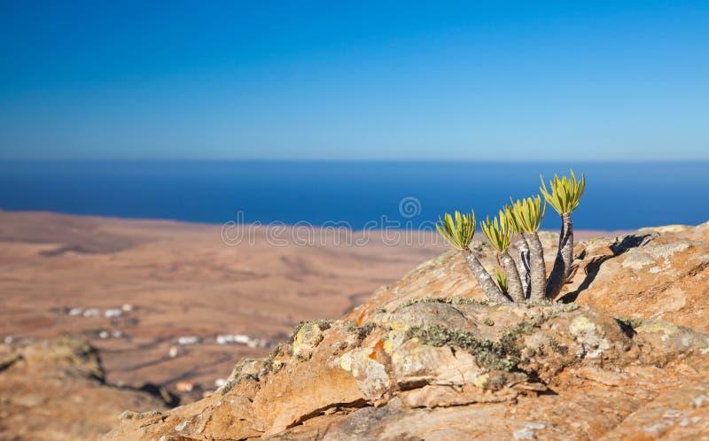 Fuerteventura intérieur, Tindaya image stock