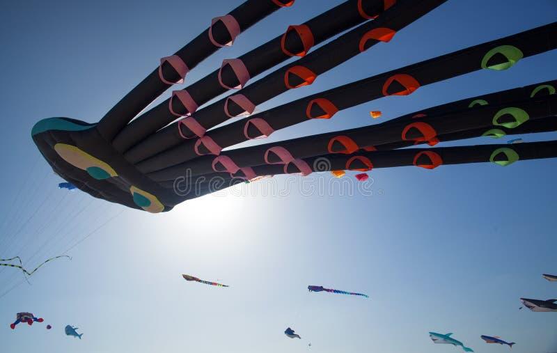 Fuerteventura kani festiwal zdjęcie stock