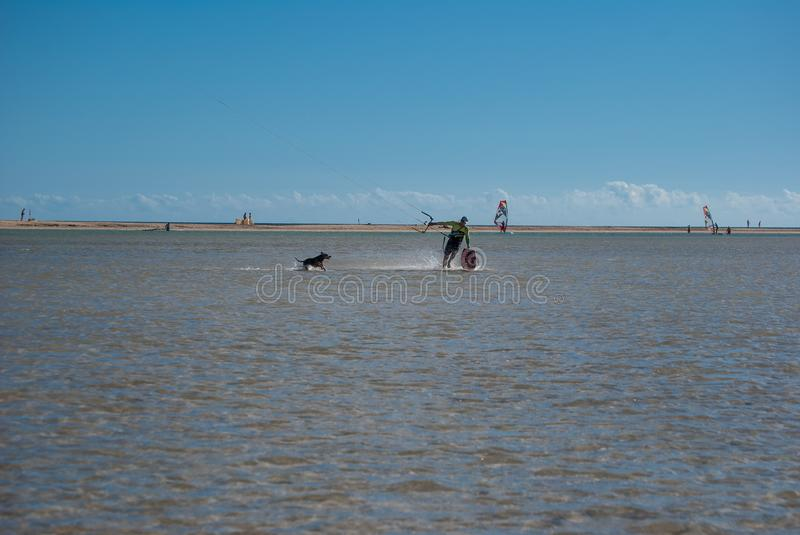 Fuerteventura, kite-surfer and dog stock photos