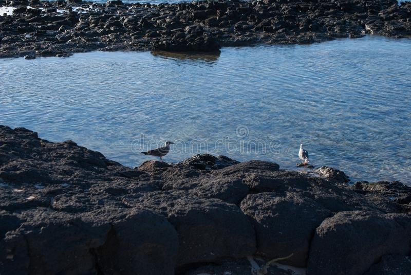 Fuerteventura, low tide. stock photo