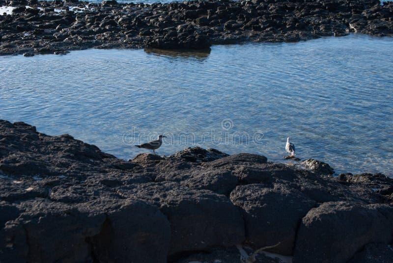 Fuerteventura, marée basse photo stock
