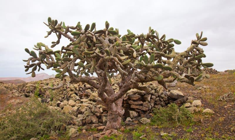 Fuerteventura septentrional fotografía de archivo libre de regalías
