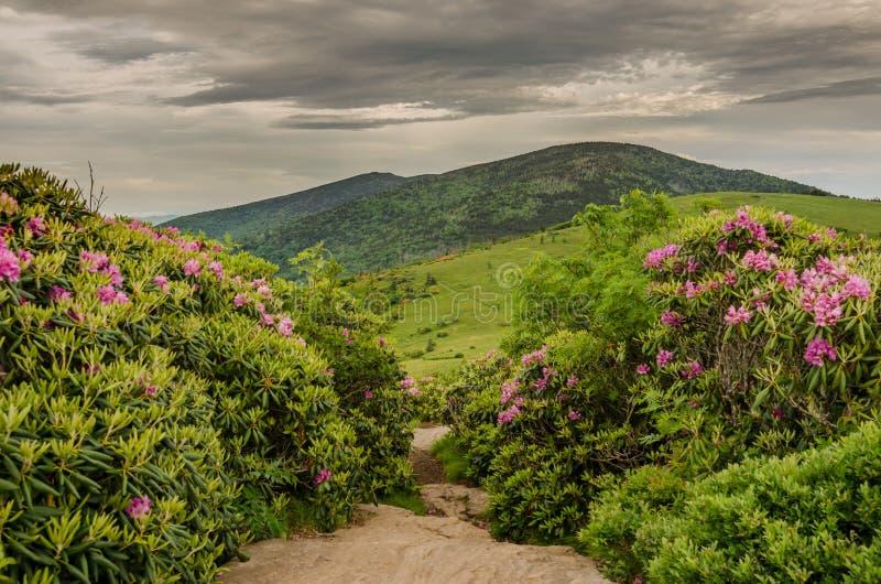 A fuga apalaches corta completamente o jardim do rododendro fotografia de stock royalty free
