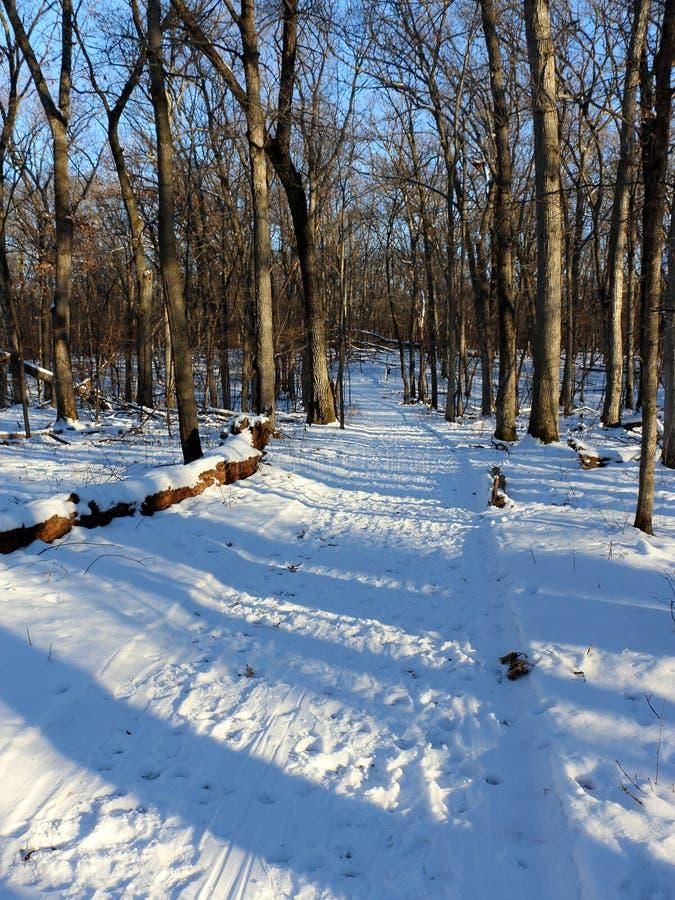Fuga arborizada do esqui no inverno imagem de stock royalty free