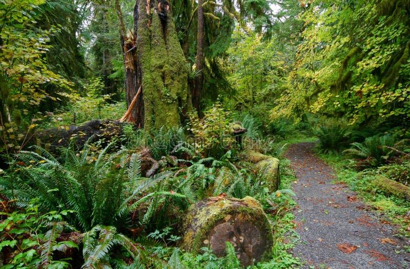 Fuga através da floresta tropical de Hoh imagem de stock royalty free