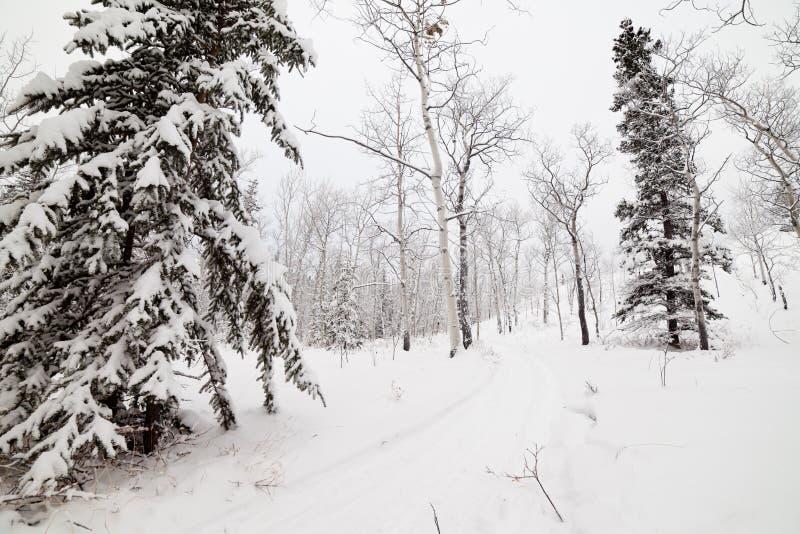 Fuga backcountry nevado do inverno em Yukon T Canadá foto de stock
