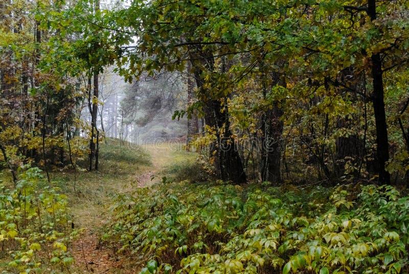 fuga cênico e bonita da estrada do cascalho do turismo no sur da floresta imagem de stock royalty free