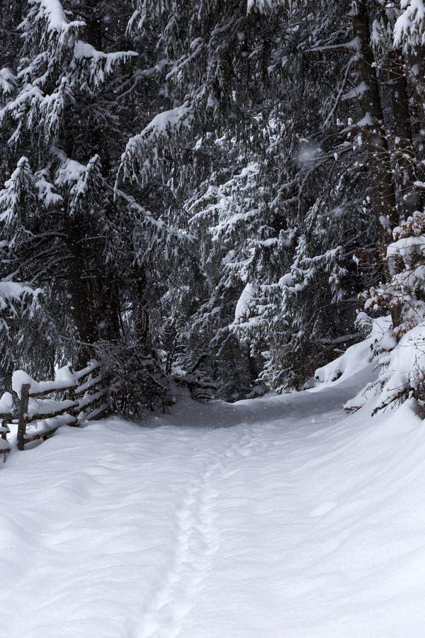 Fuga coberto de neve na floresta com ramos ao longo do trajeto imagem de stock royalty free
