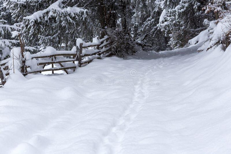 Fuga coberto de neve na floresta com ramos ao longo do trajeto dentro imagens de stock