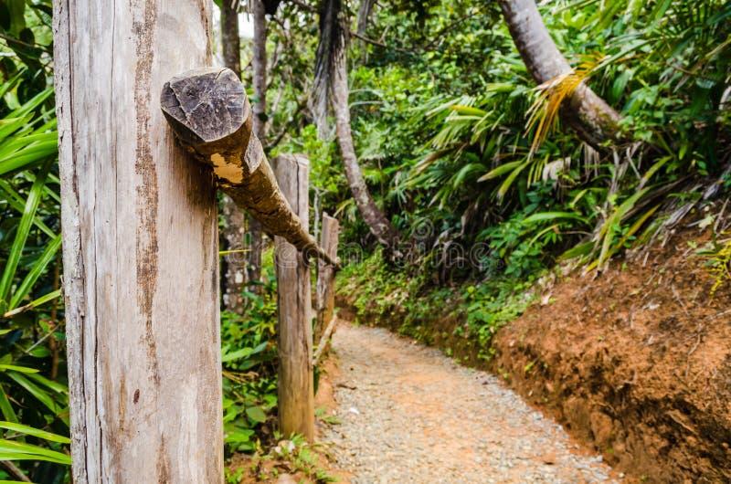 Fuga com cascalho e um corrimão de madeira entre árvores e plantas tropicais foto de stock