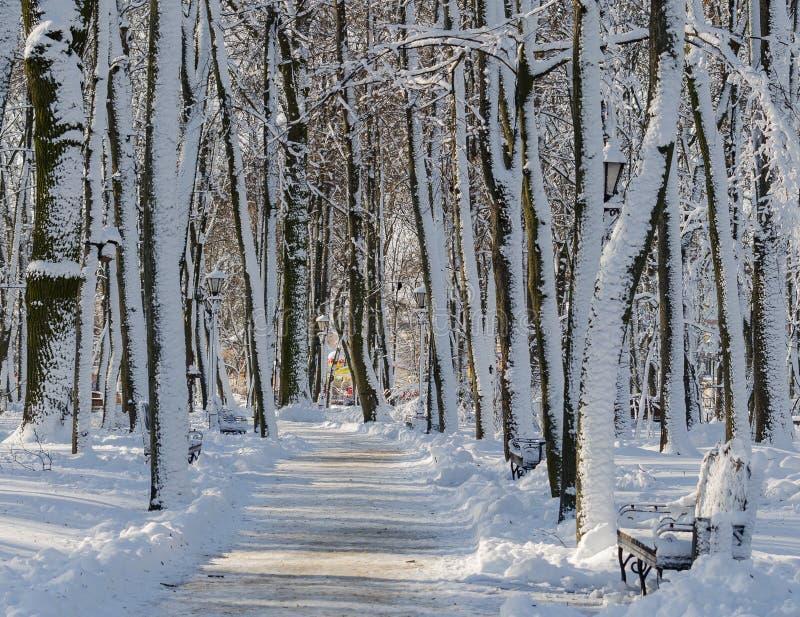 Fuga da aleia na distância entre árvores em um parque coberto de neve imagem de stock