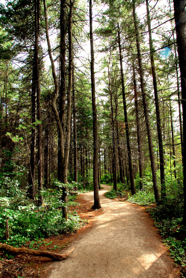Fuga da floresta fotos de stock royalty free