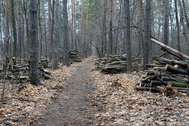 Fuga da floresta no outono atrasado, dia nublado imagem de stock royalty free