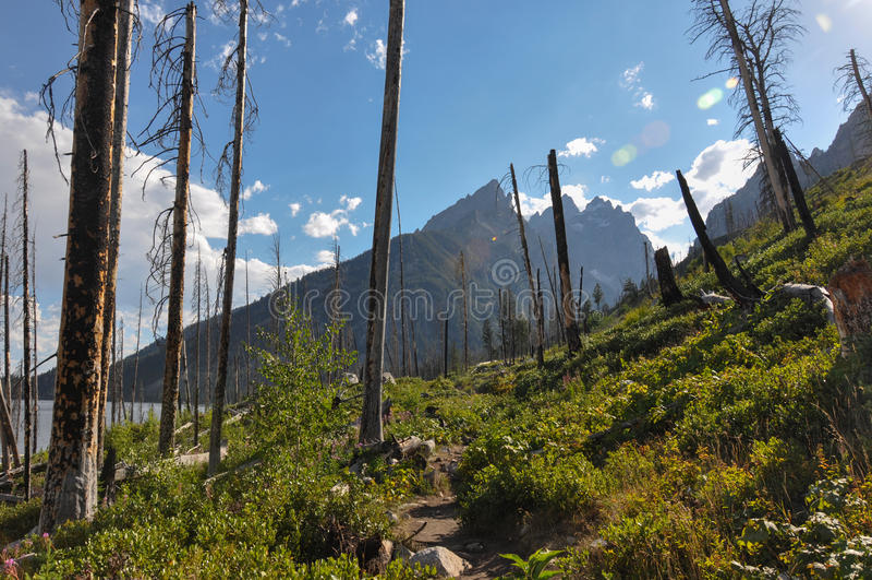 Fuga da garganta do pincel no parque nacional grande de Tetons, Wyoming, fotos de stock royalty free