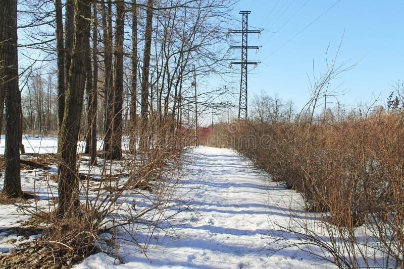 Fuga da neve ao longo de uma fileira dos arbustos e das árvores fotos de stock royalty free