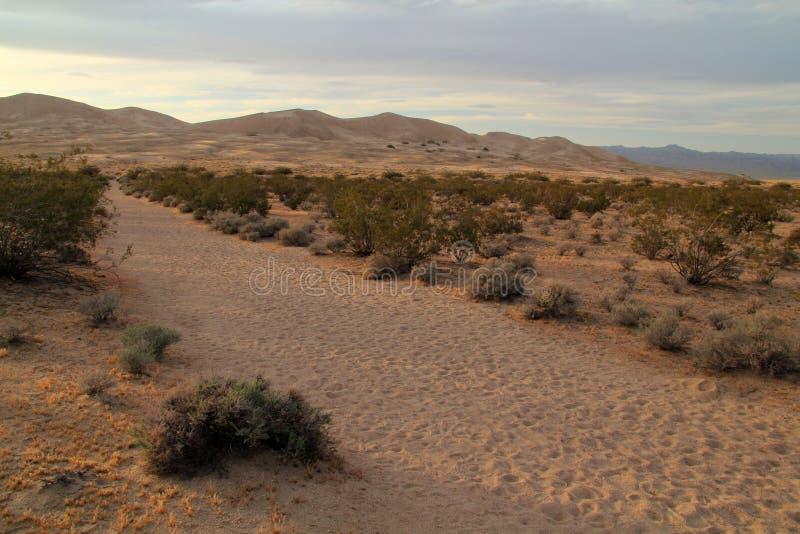 Fuga das dunas de Kelso fotos de stock