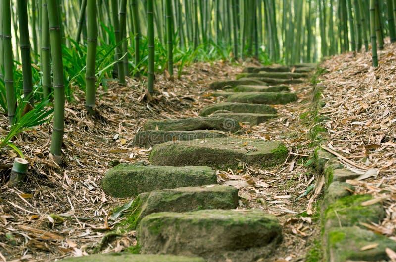 Fuga de bambu da floresta fotografia de stock royalty free