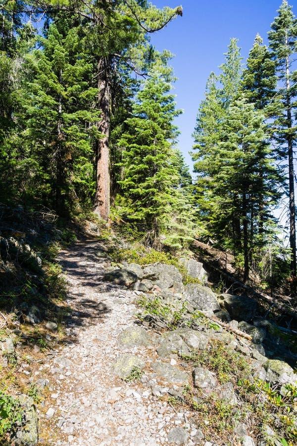 Fuga de caminhada à parte superior do montículo preto, perto da montanha de Shasta, Siskiyou County, Califórnia do norte imagem de stock