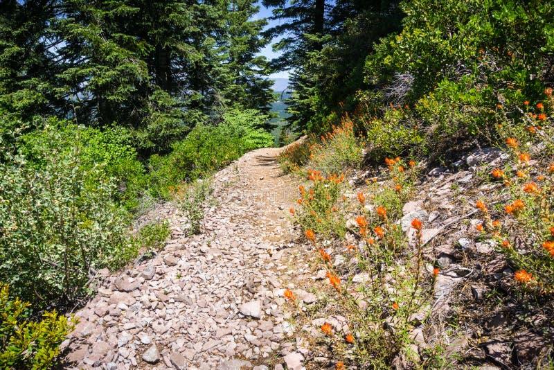 Fuga de caminhada à parte superior do montículo preto, perto da montanha de Shasta, Siskiyou County, Califórnia do norte imagens de stock royalty free