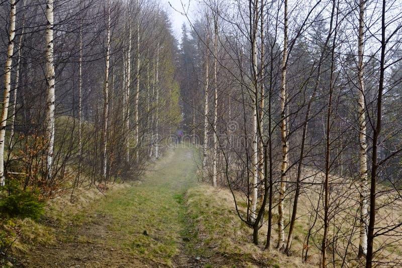 Fuga de caminhada através da floresta exterior nas montanhas foto de stock royalty free