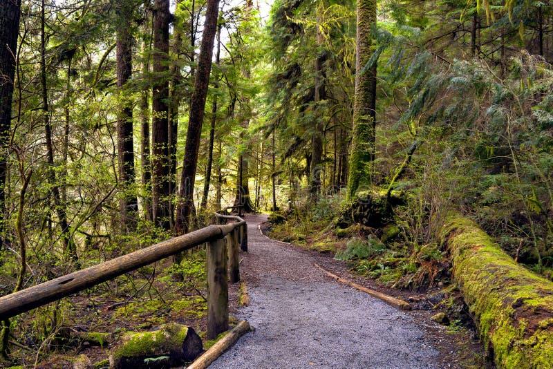 Fuga de caminhada através da floresta molhada fotos de stock royalty free