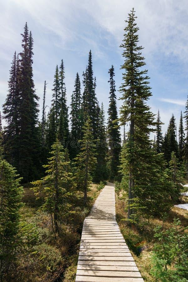 fuga de caminhada bonita com as árvores altas no parque provincial Canadá do garibaldi fotos de stock royalty free