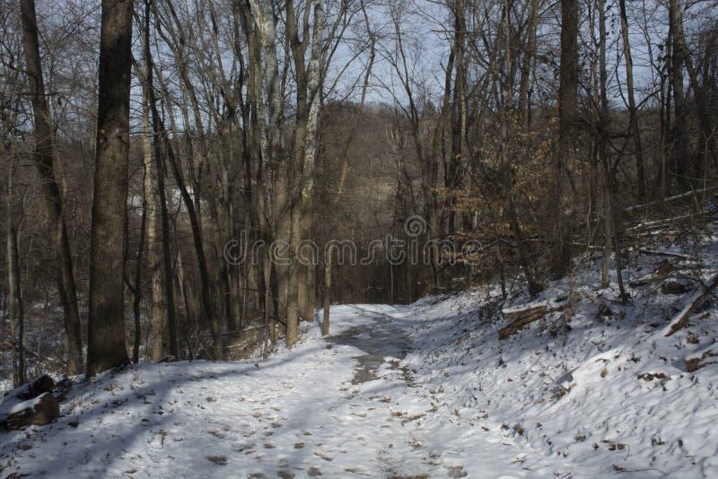 Fuga de caminhada coberto de neve através da floresta imagens de stock