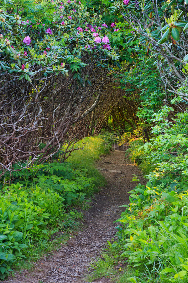 Fuga de caminhada Craggy vertical do NC dos jardins fotos de stock