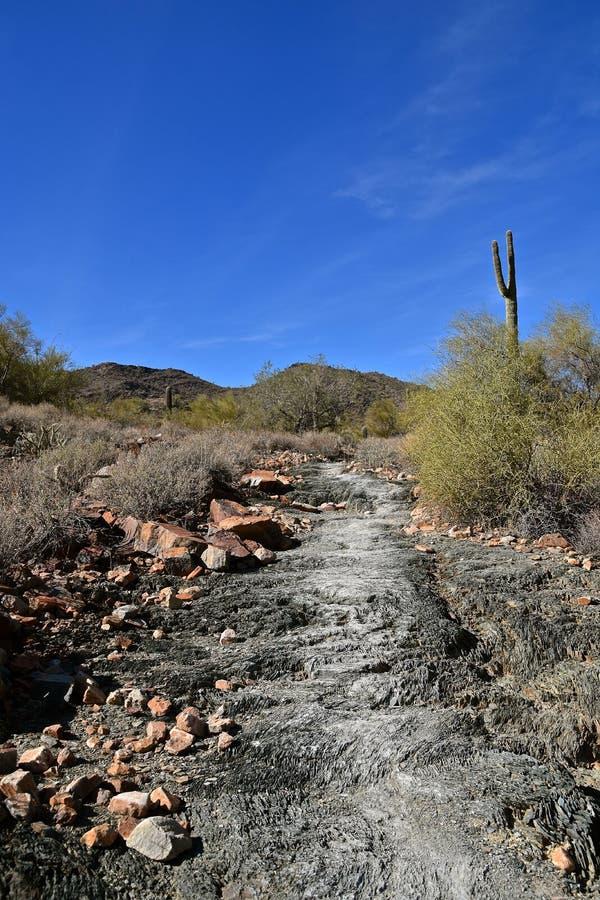 Fuga de caminhada da natureza que conduz através do deserto do Arizona fotos de stock royalty free