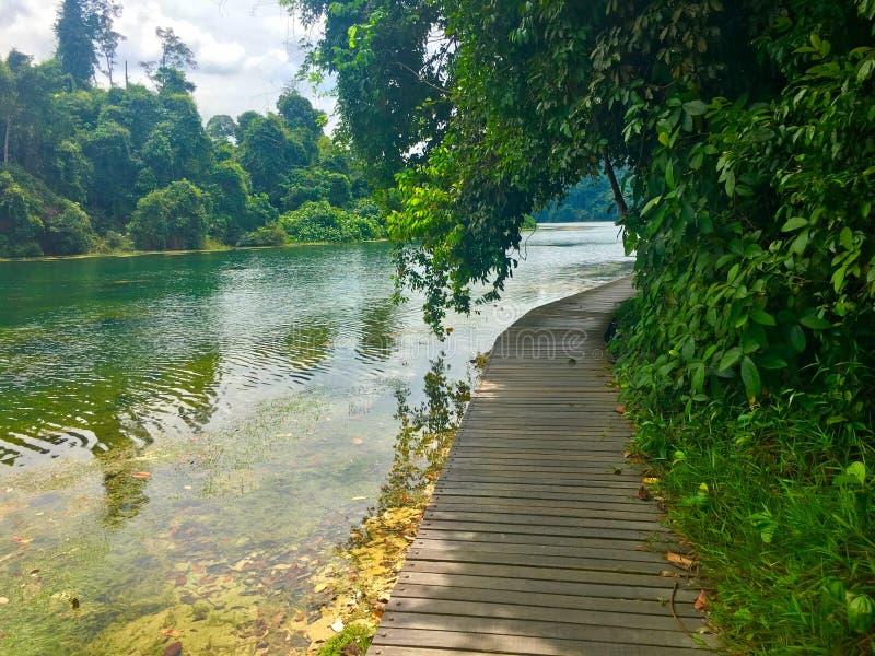 Fuga de caminhada em torno do reservatório Singapura de Macritchie fotografia de stock royalty free