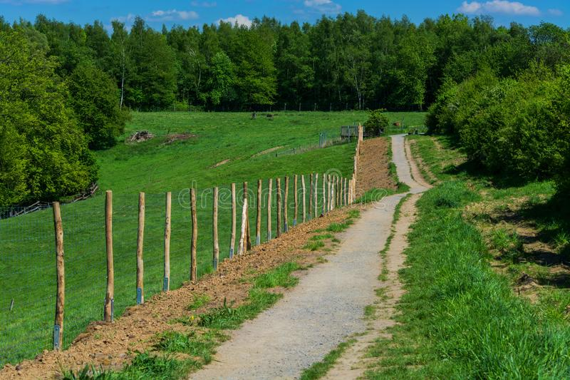 Fuga de caminhada na área natural da floresta fotos de stock royalty free