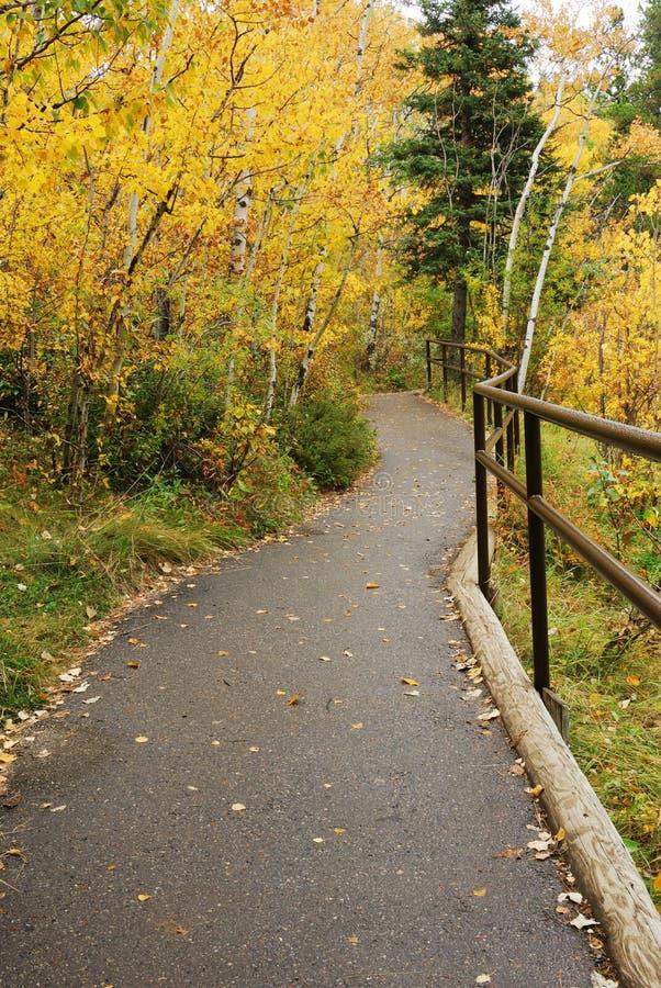 Fuga de caminhada na floresta do outono fotos de stock