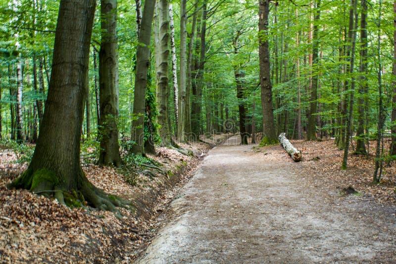Fuga de caminhada na floresta imagens de stock royalty free
